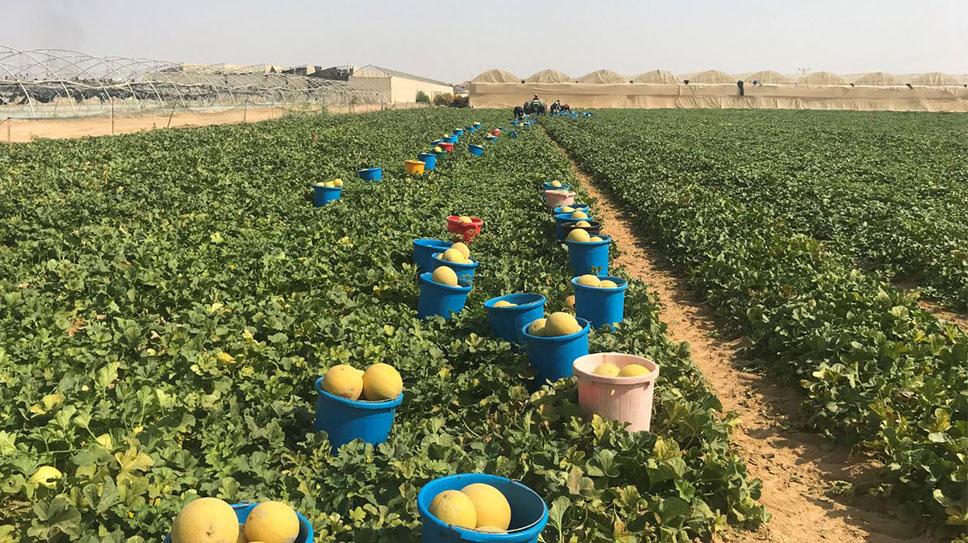 Arave Open Field Day - September, 2019, Arava, Israel