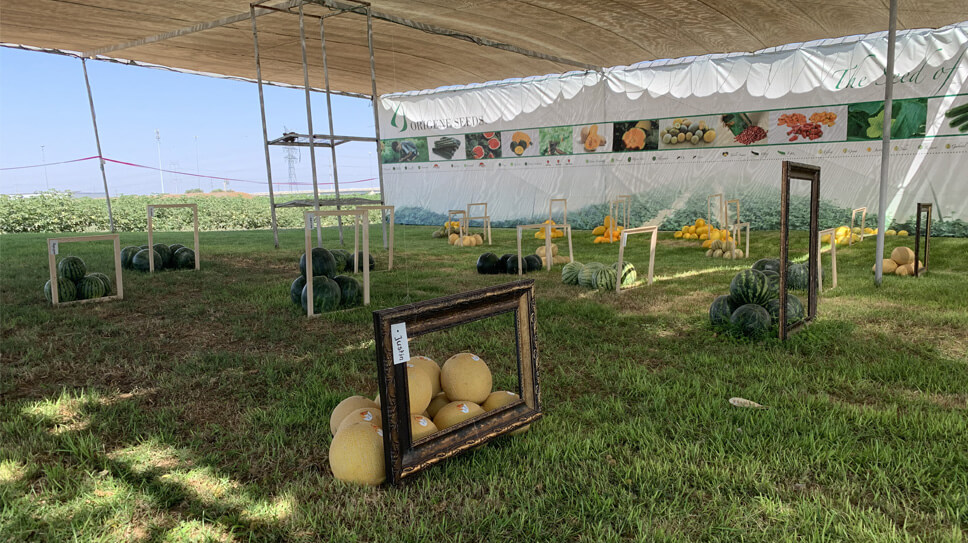 OPEN FIELD DAYS - JULY 2020, BNEI DAROM, ISRAEL