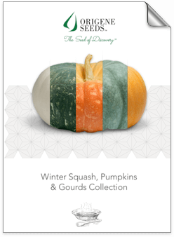 Origene Seeds Pumpkins brochure