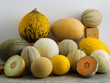Melons Collection