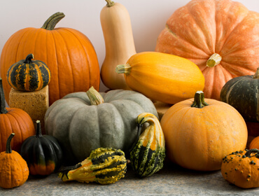 Pumpkins & Gourds Collection