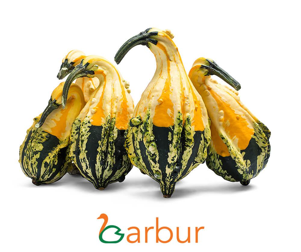 Barbur