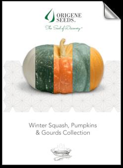 Origene Seeds Pumpkins brochure