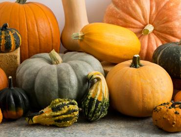 Winter Squash, Pumpkins & Gourds Collection