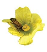 Pollenizers