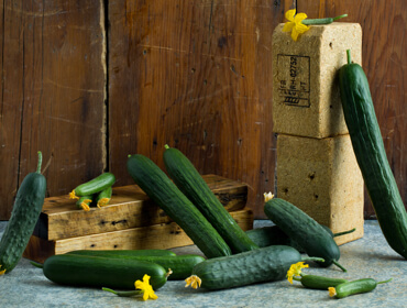 Cucumber Collection